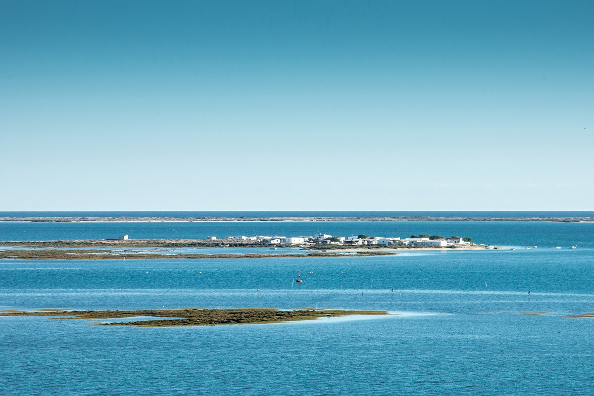 Ria Formosa protected wildlife
